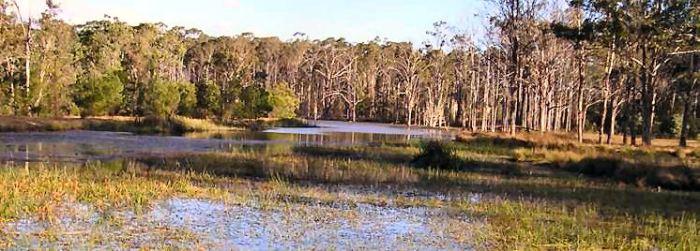 ou-trouver-kangourous-sydney